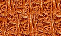 янтарная кожа